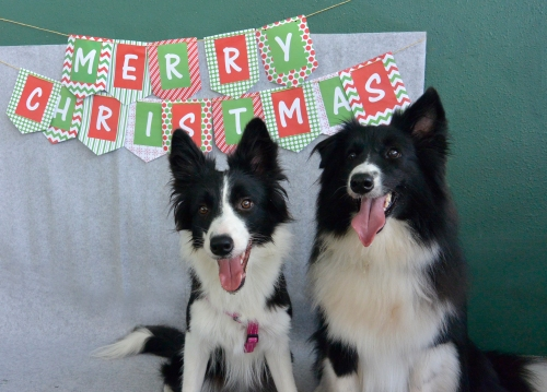 DogsOfInstaSG Christmas Party